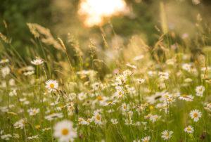 Natur- und Klimaschutz